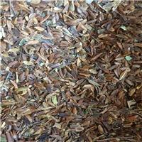 现货供应 紫丁香种子 厂家批发价格