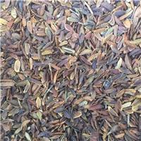 今年新货 紫丁香种子 人工脱壳 干净饱满