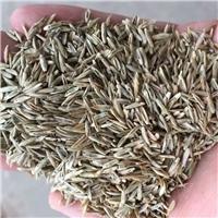 辽宁省黑麦草种子东北黑麦草种子