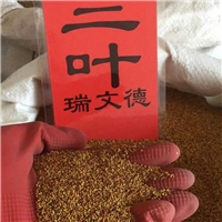今年新货 白三叶种子 厂家批发价格