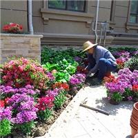 苏州别墅绿化设计 别墅花园设计施工