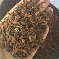 东北 紫丁香种子 多少钱一斤