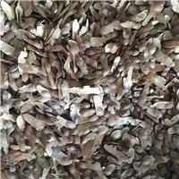 批发 元宝枫种子 发芽率高 质量保证