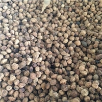今年新洗 臭李子种子 经过沙藏沉积催芽处理