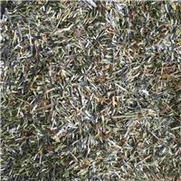 今年新�� 万寿菊种子 草原野生品种