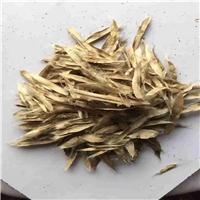 供应 黄金树种子 品种纯正 生长速度快