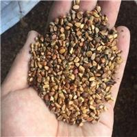 东北供应 黄刺玫种子 厂家直销批发价格