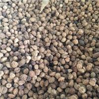 春季播种育苗紫叶稠李种子保真保新出芽率高