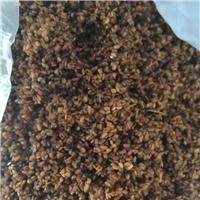 供应 刺嫩芽种子 经过催芽低温沉积处理