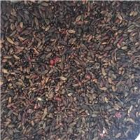 辽宁省 红叶小檗种子 多少钱一斤