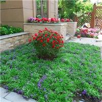 苏州私家花园绿化 别墅花园景观绿化设计