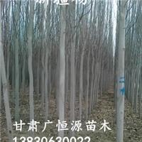 新疆杨|新疆杨苗条|新疆杨价格|甘肃新疆杨