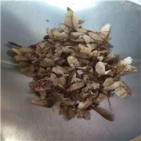 辽宁省茶条槭种子新货批发