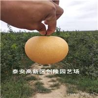 一公分秋月梨树苗多少钱一棵