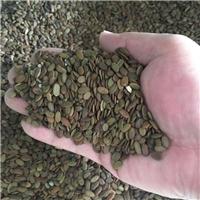 合欢树种子价格金合欢银合欢颜轲种业供应