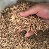 新采复叶槭种子鸡爪槭种子价格颜轲种业供应