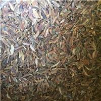 现货供应 红丁香种子 厂家批发价格