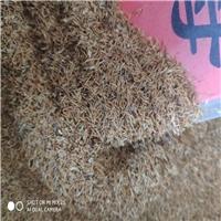 辽宁省 珍珠梅种子 价格一览表