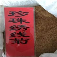辽宁省珍珠绣线菊种子东北珍珠绣线菊种子