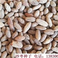 沙枣种子|当年新加工沙枣籽种