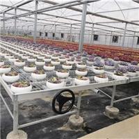 新沂温室苗床专业生产商-品质保证-航迪