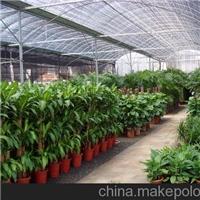 北京办公室绿植租赁公司