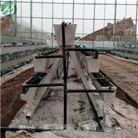 温室优质立体种植设备-三层立体种植架批发