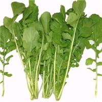芝麻菜种子 野菜种子 番杏保健蔬菜种子