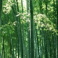 淄博奥景园艺公司常年供应竹子