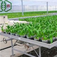 青县花卉育苗设备-养花移动苗床-热镀锌