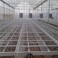 供应青县茄子育苗-热镀锌苗床-移动苗床