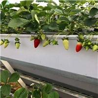 蛟河立体草莓槽 草莓槽种植架 全面方位销售