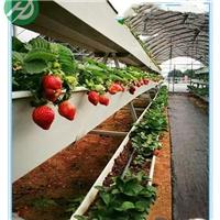 江苏新型草莓槽种植架产品简介