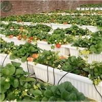 基地立体特大号草莓槽 草莓A字种植架