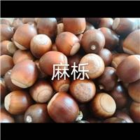 麻栎种子,麻栎种子价格
