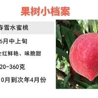 大量批发出售早熟春雪桃突围桃品种纯正