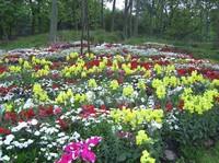 植物园花展