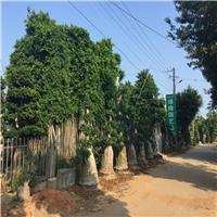 漳浦县沙西镇绿榕园艺场