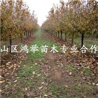 泰安市泰山区鸿举苗木种植专业合作社