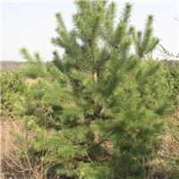 河北滦源园林绿化工程有限公司