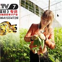 辽宁省丹东市春萍农业有限公司