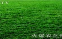 草坪的栽培技术