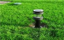怎么搭配草坪种子
