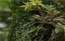 苔藓的防治方法