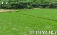 草坪的种植与管理技术