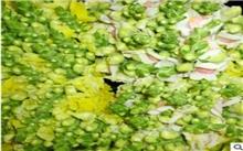 如何栽培金鱼草