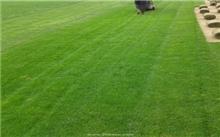 冷季草坪的种植与管理