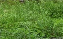 亚原生生态系统宣言