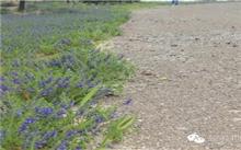 提高盐碱地植物成活率对策