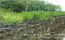 针对土壤盐碱特点高唐做好园林绿化